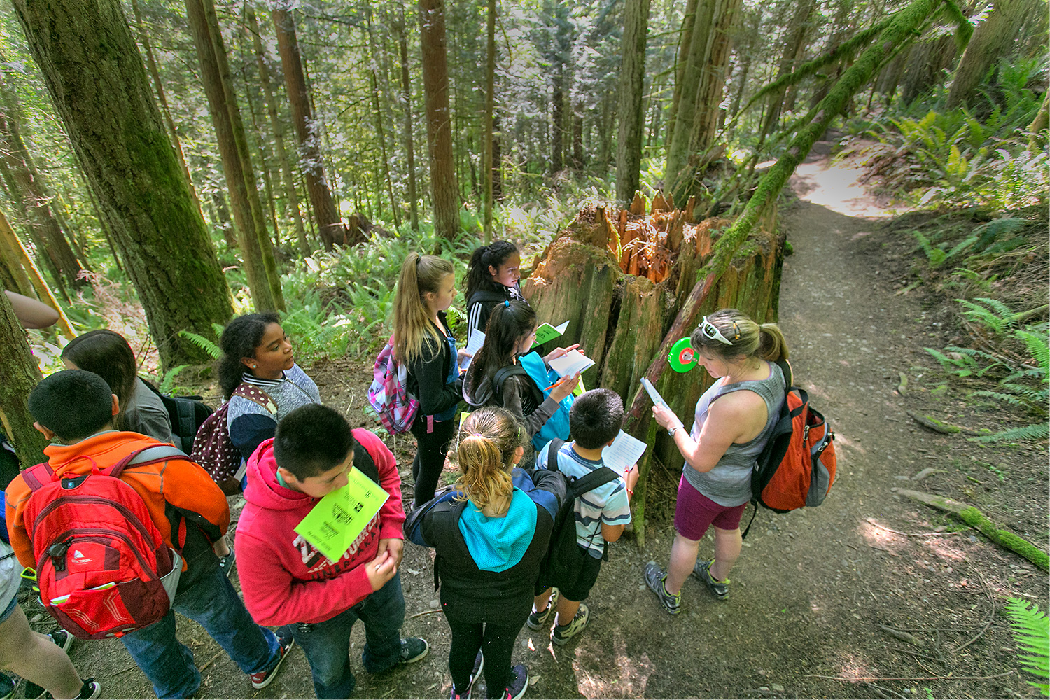 "Working from their ""Little Mountain School"" guide books, students use an old-growth cedar stump to learn about measuring trees."
