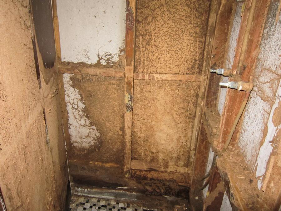Termite damage behind shower wall