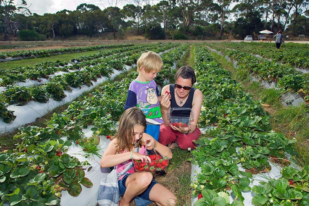 2008-Turners-Berry-Patch-(Fresh-Strawberries),-Ulverstone.jpg