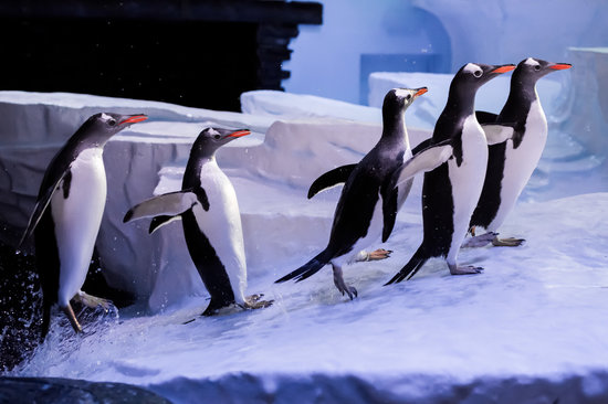 Penguins giving it some @ The Deep, Hull