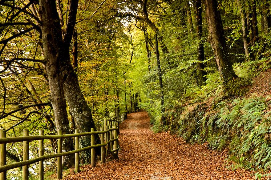 Kilminorth Woods