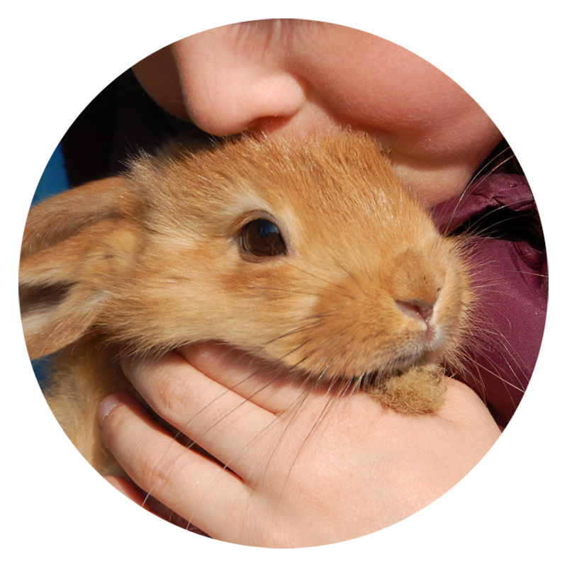 I know that your smaller animals will need my professional pet care services too!