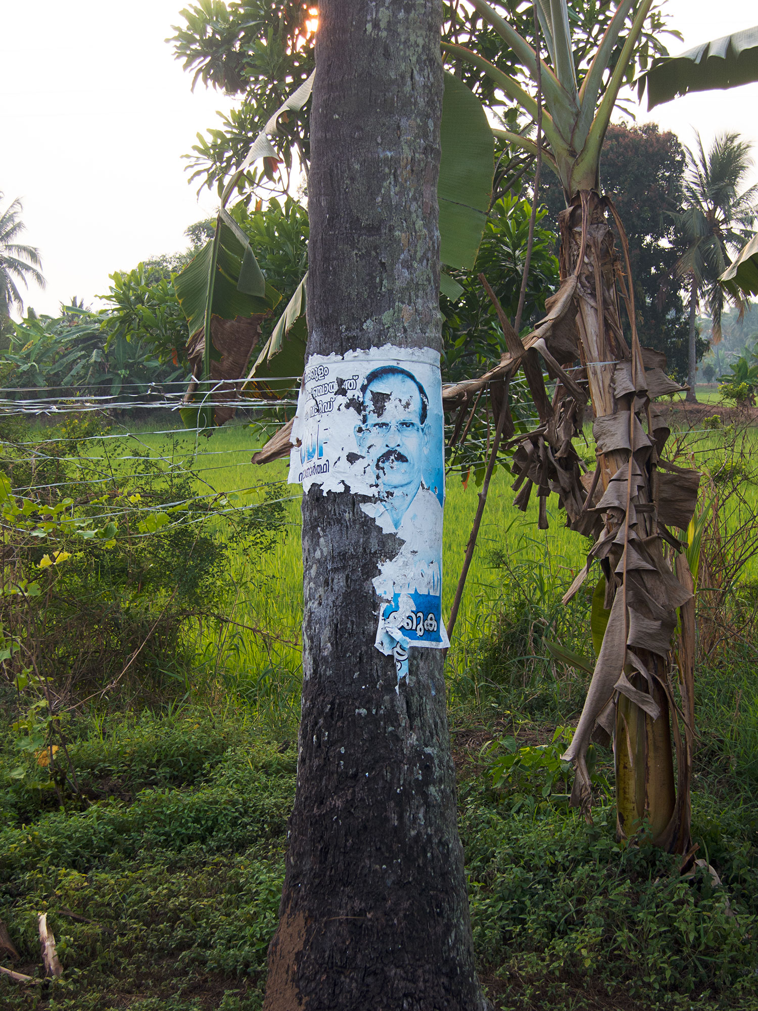 Political poster on a coconut tree.