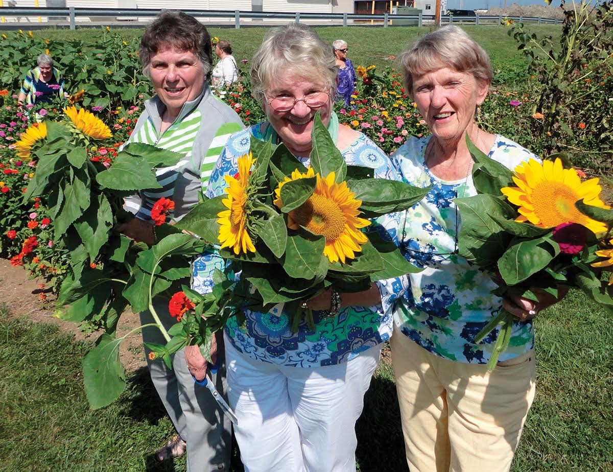 DearbornCountyCVB_Harvesting sunflowers for arrangements at McCabe's Greenhouse & Floral.jpg