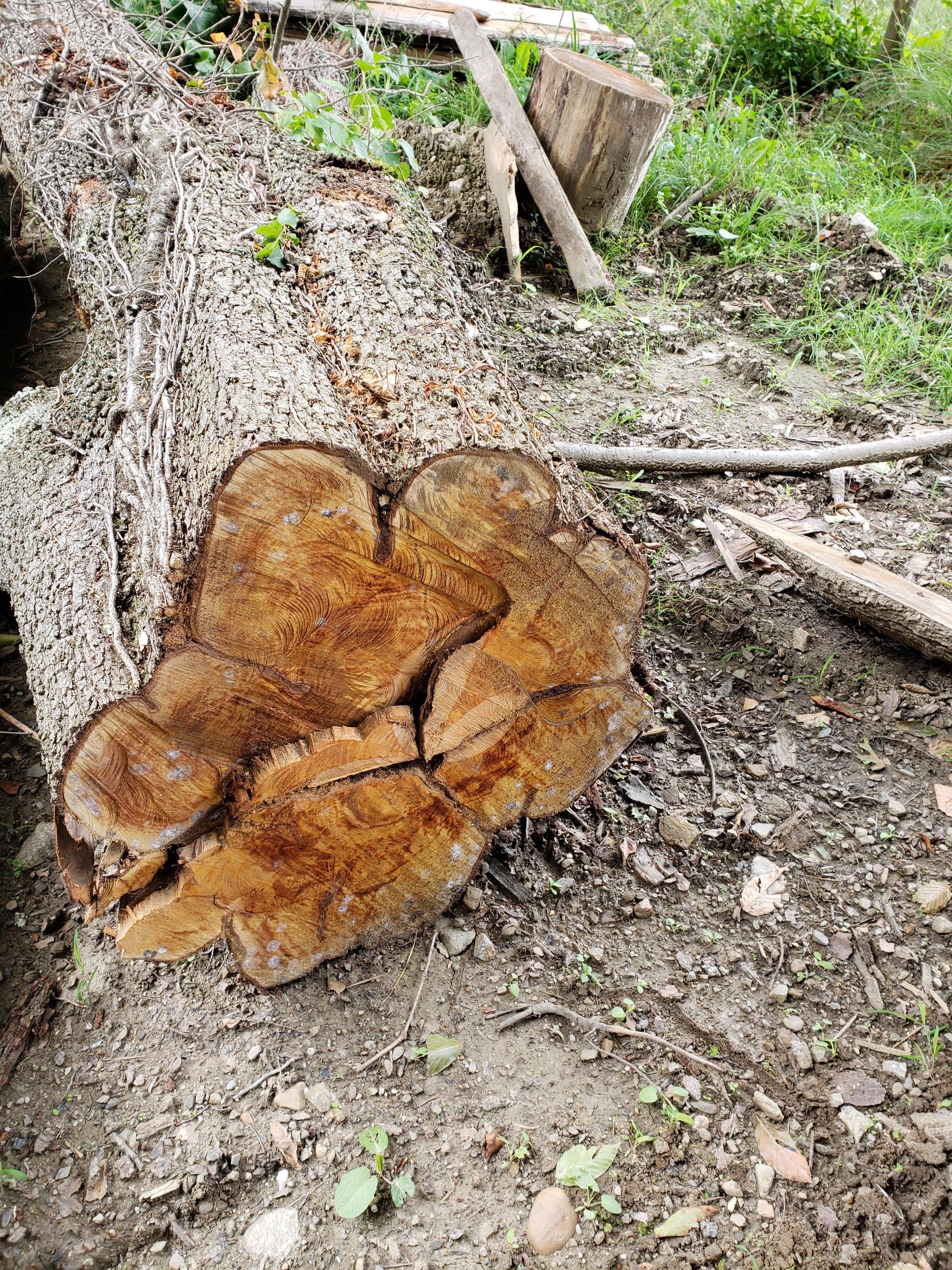 pear log.jpg