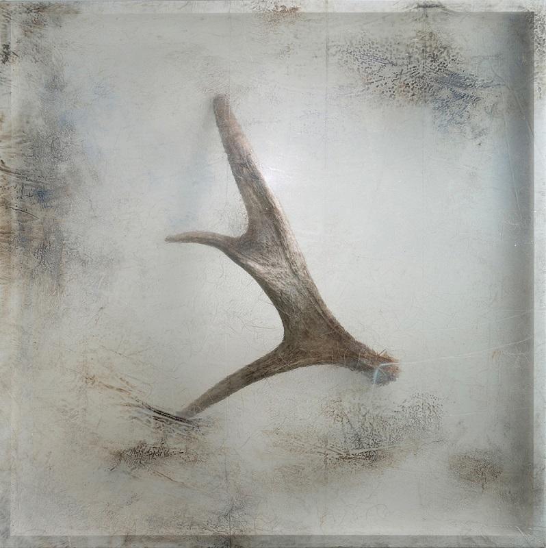 Remnant (Moose Antler), 2016