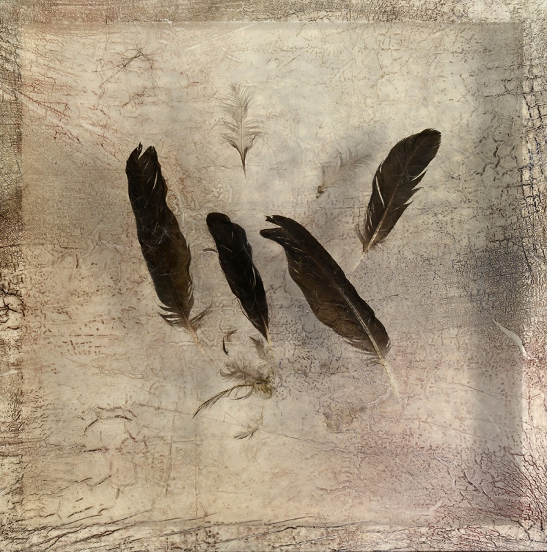 Sonya Kelliher-Combs, Remnant (Large Feather), 2016