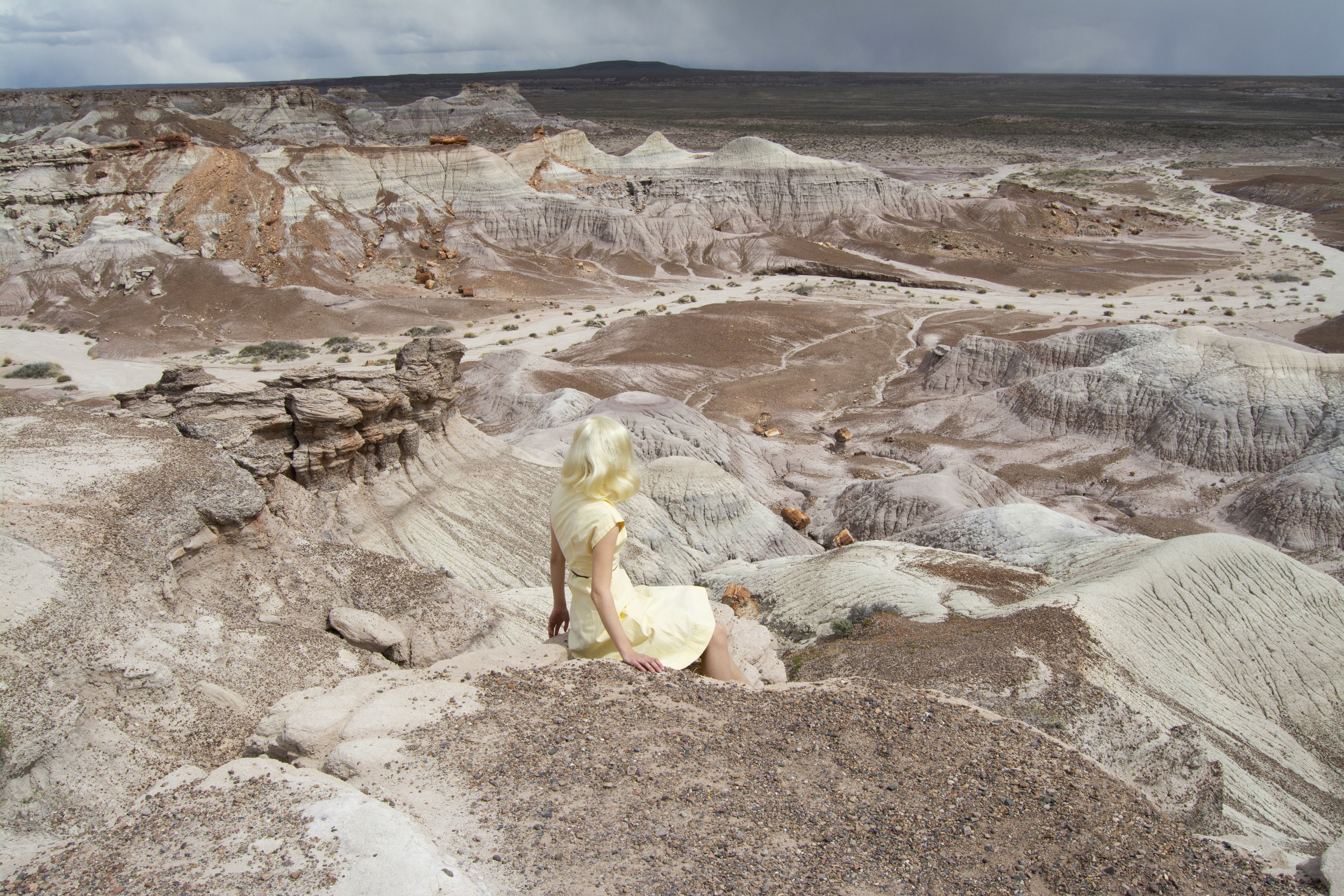 Petrified Forest, 1/12, 2019