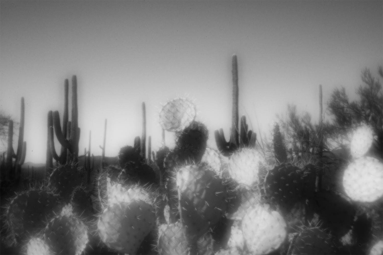 Prickly-PearC72.jpg