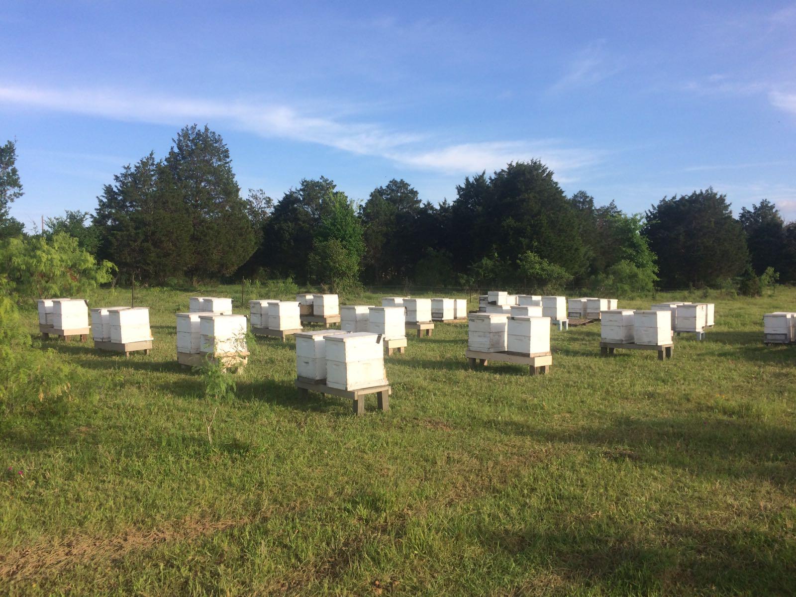beehive-austin-farm.jpg