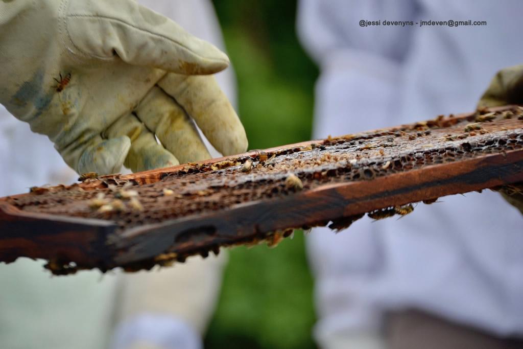 beekeeping austin honey company