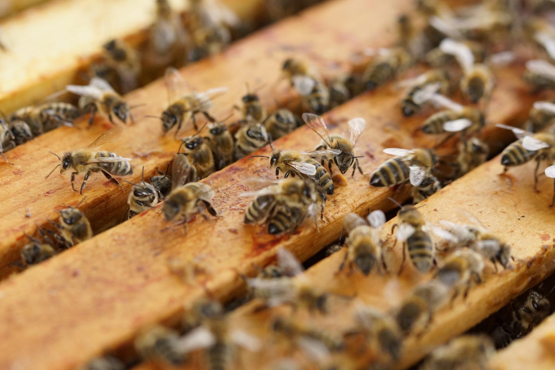 beehive-1143380_1920.jpg