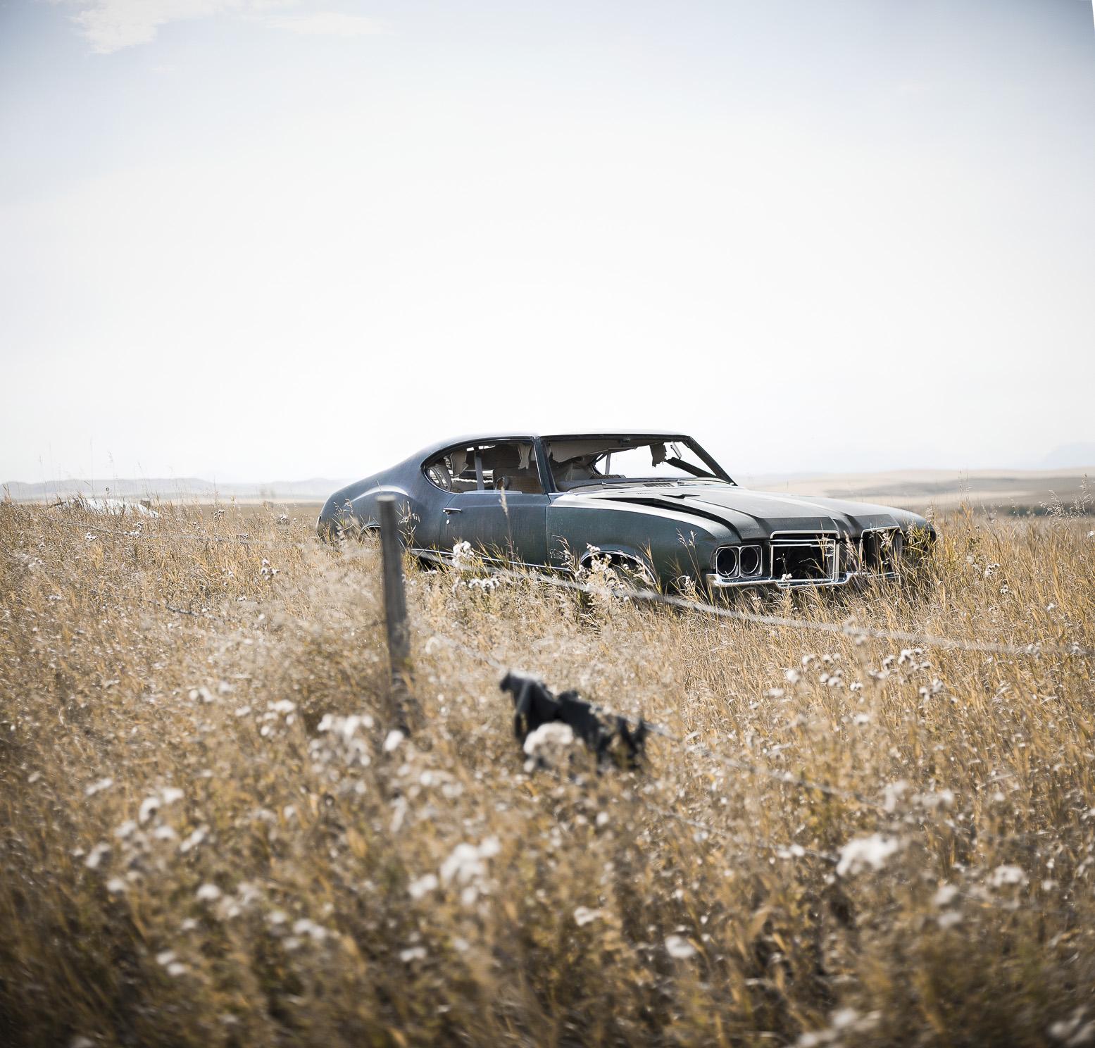 cargrass01 Panorama.jpg