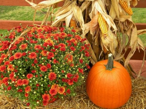 Fall Cornucopia -- Rosslyn (VA) November 2012