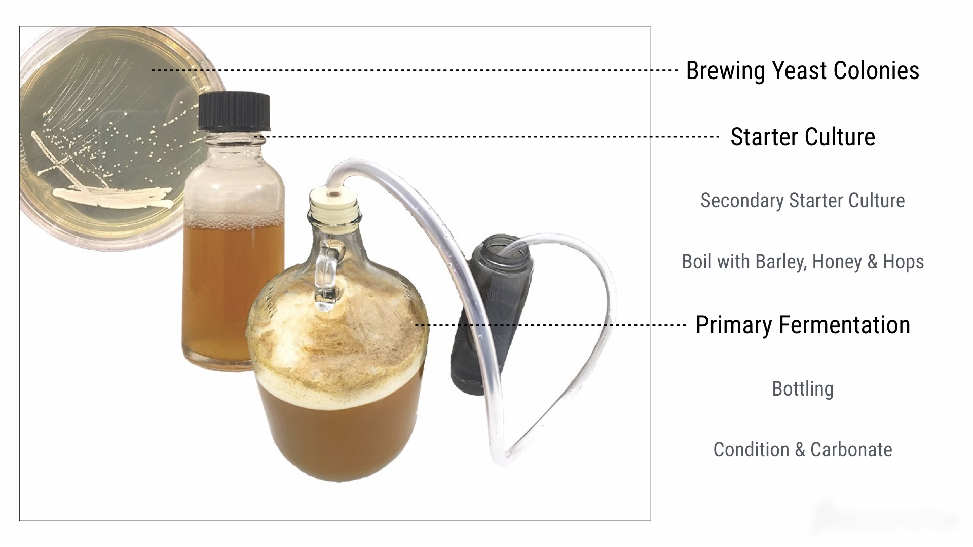 Our beer brewing process thus far with yeast strains from White Labs.