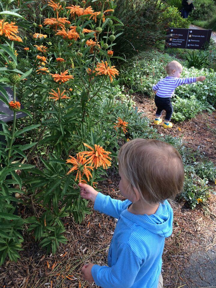 explorers flowers.jpg