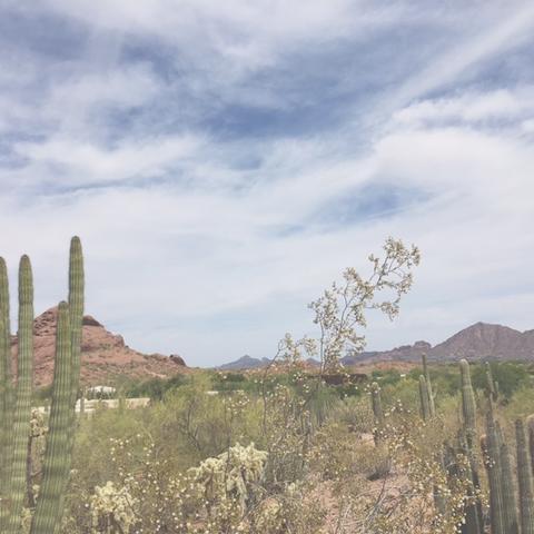Phoenix_Desert_Museum_large.jpeg