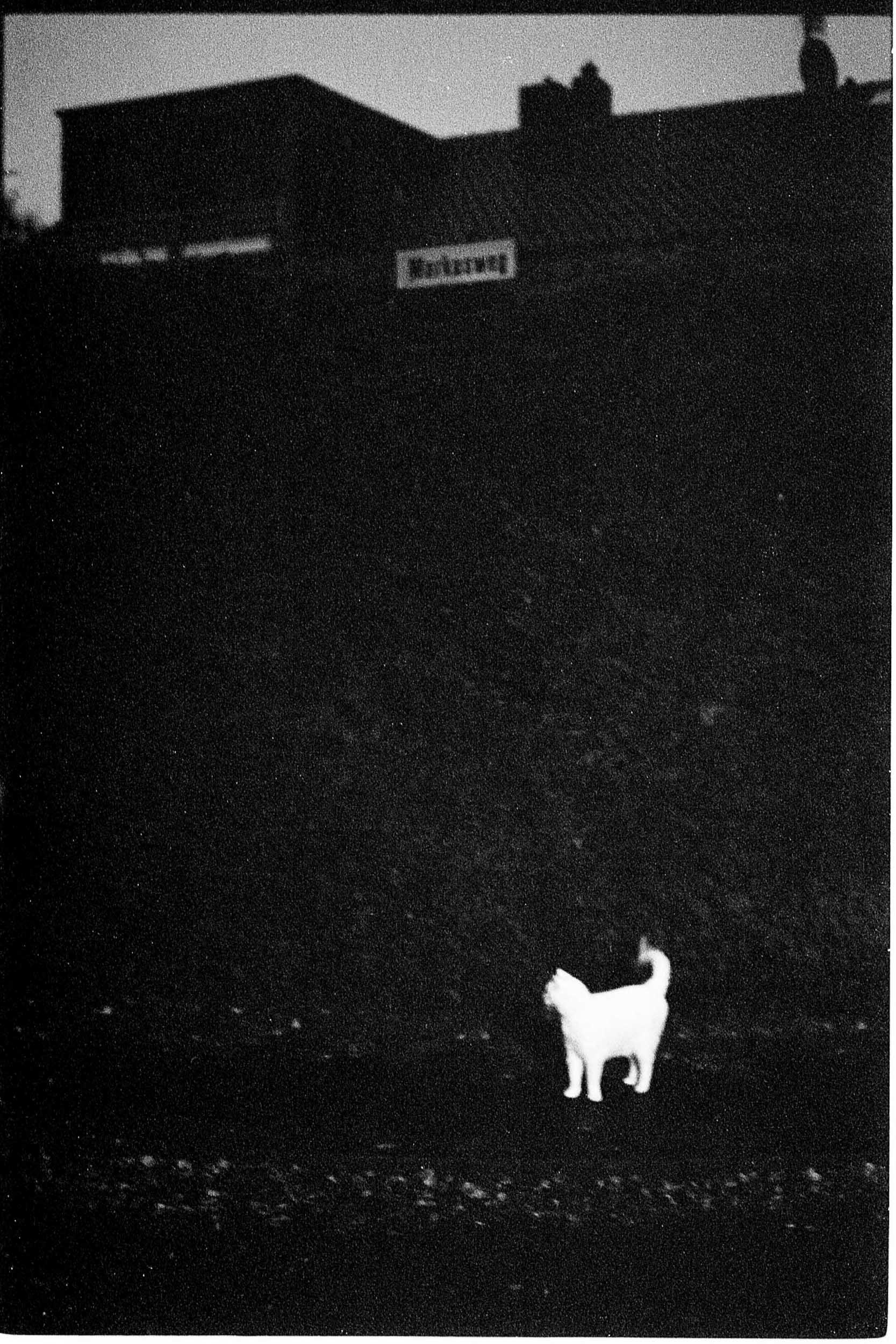 Le Chat de Markusweg.   Weiß, 2016.