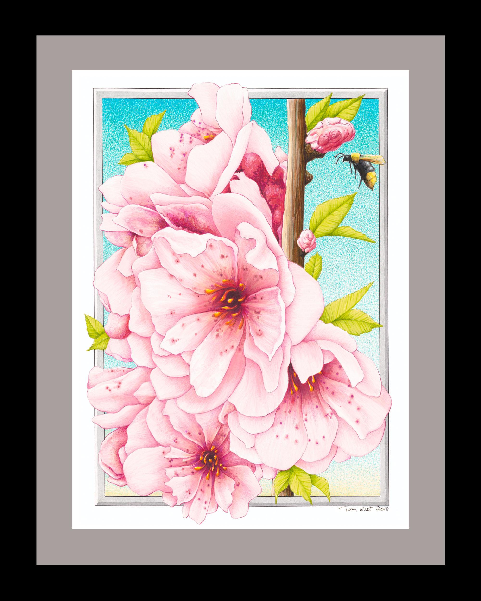 Cherry Blossoms 100dpi.jpg