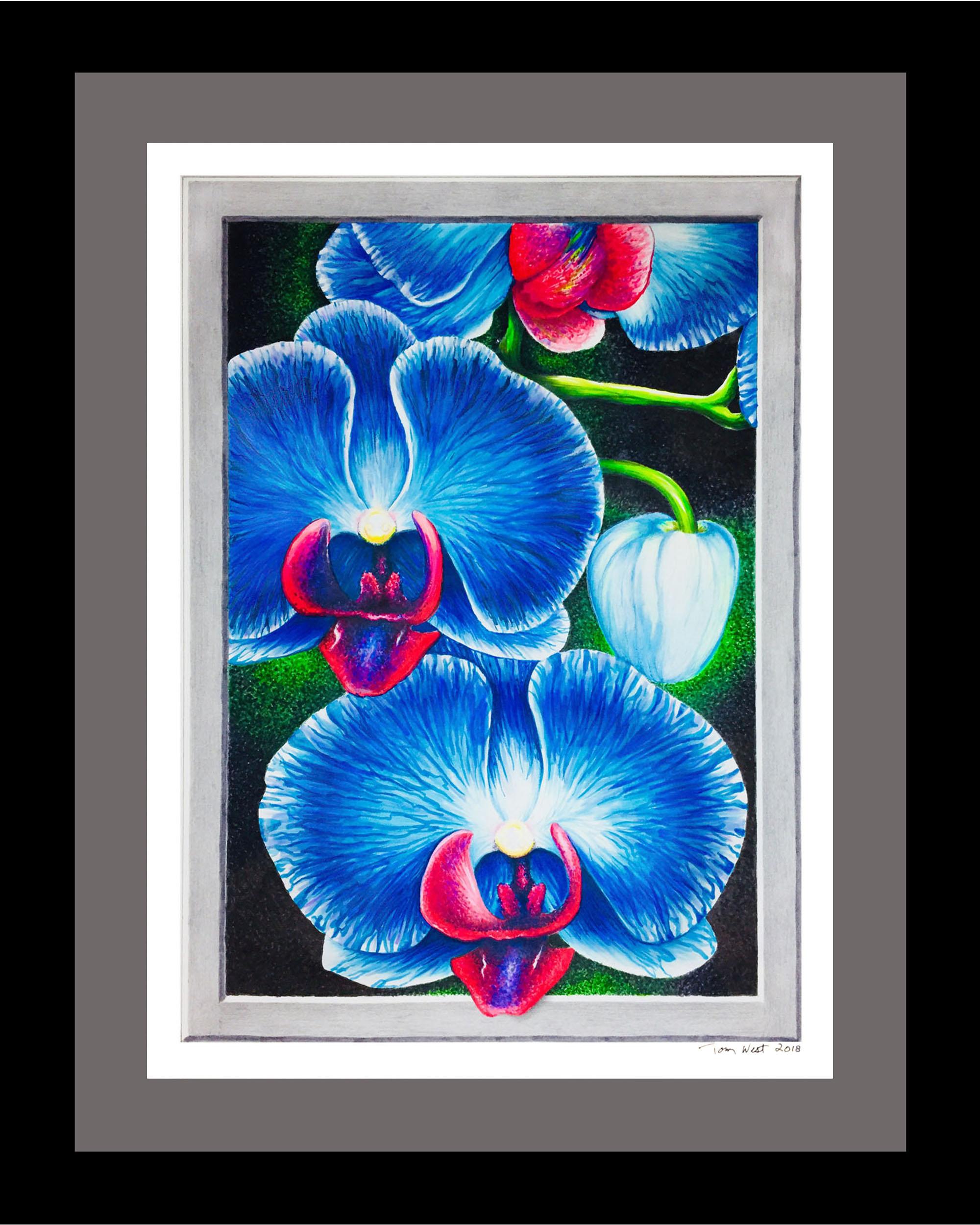 Blue Orchids 100dpi.jpg
