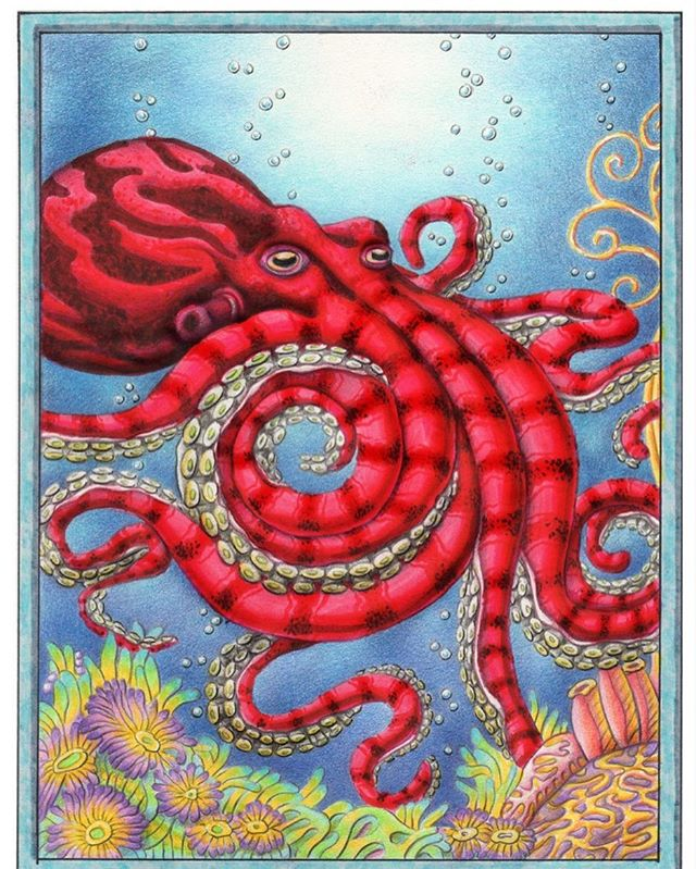 Going back to an ocean theme. My new original octopus is now framed and ready for sale. DM me for details if interested. Might make a cool coloring page? I'll be @portlandsaturdaymarket this Saturday 10:00am - 5:00pm Booth 804! #octopus #octopusart #originalart #oceanart #pdxart #pdx #pnw #pnwartist #illustration #myart #portlandsaturdaymarket #undersea #wildlifeart #color #coloring #colorpencil #brushmarkers #tomwestartworks