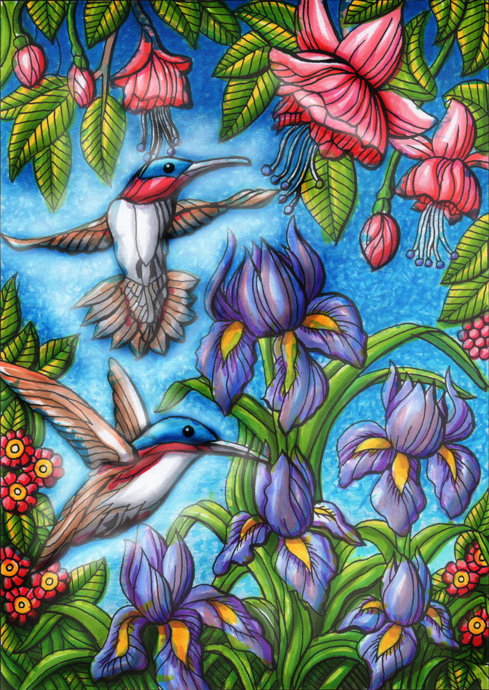Hummingbirds illus 150dpi rev.jpg