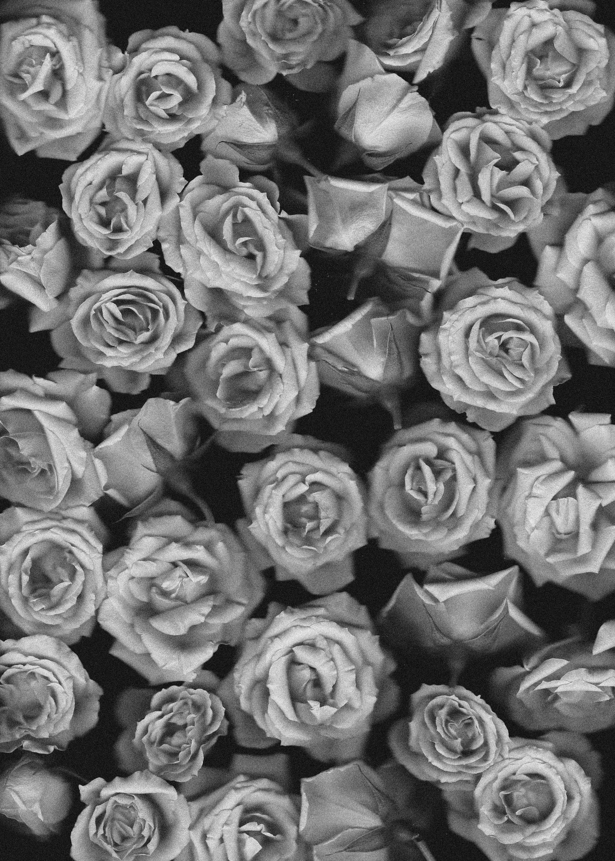 words-as-flowers-02.jpg