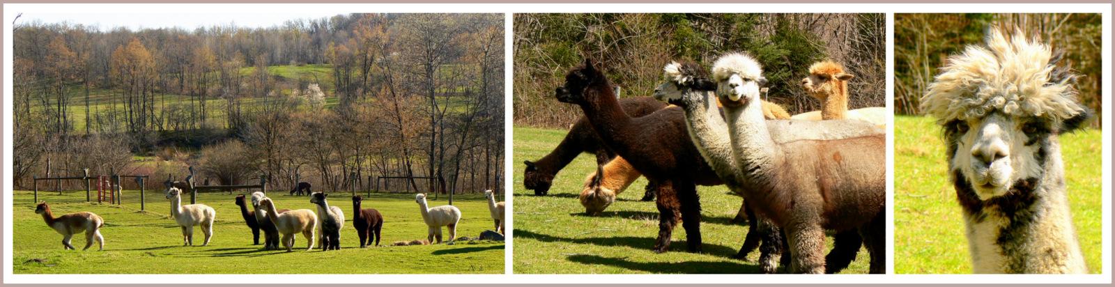 Annadele Alpaca Farm