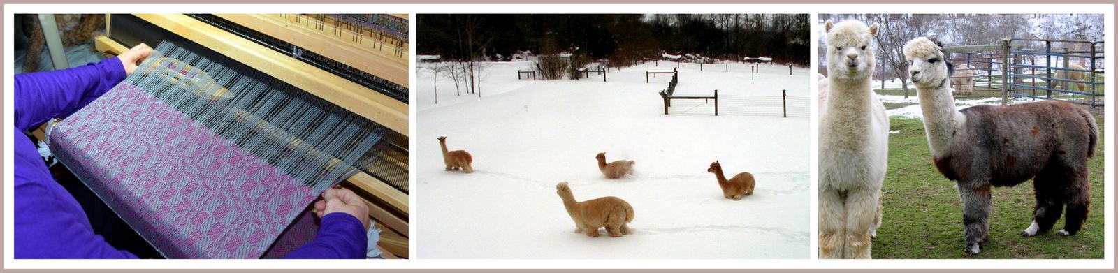 Annadele Alpacas, Open House, Open Farm