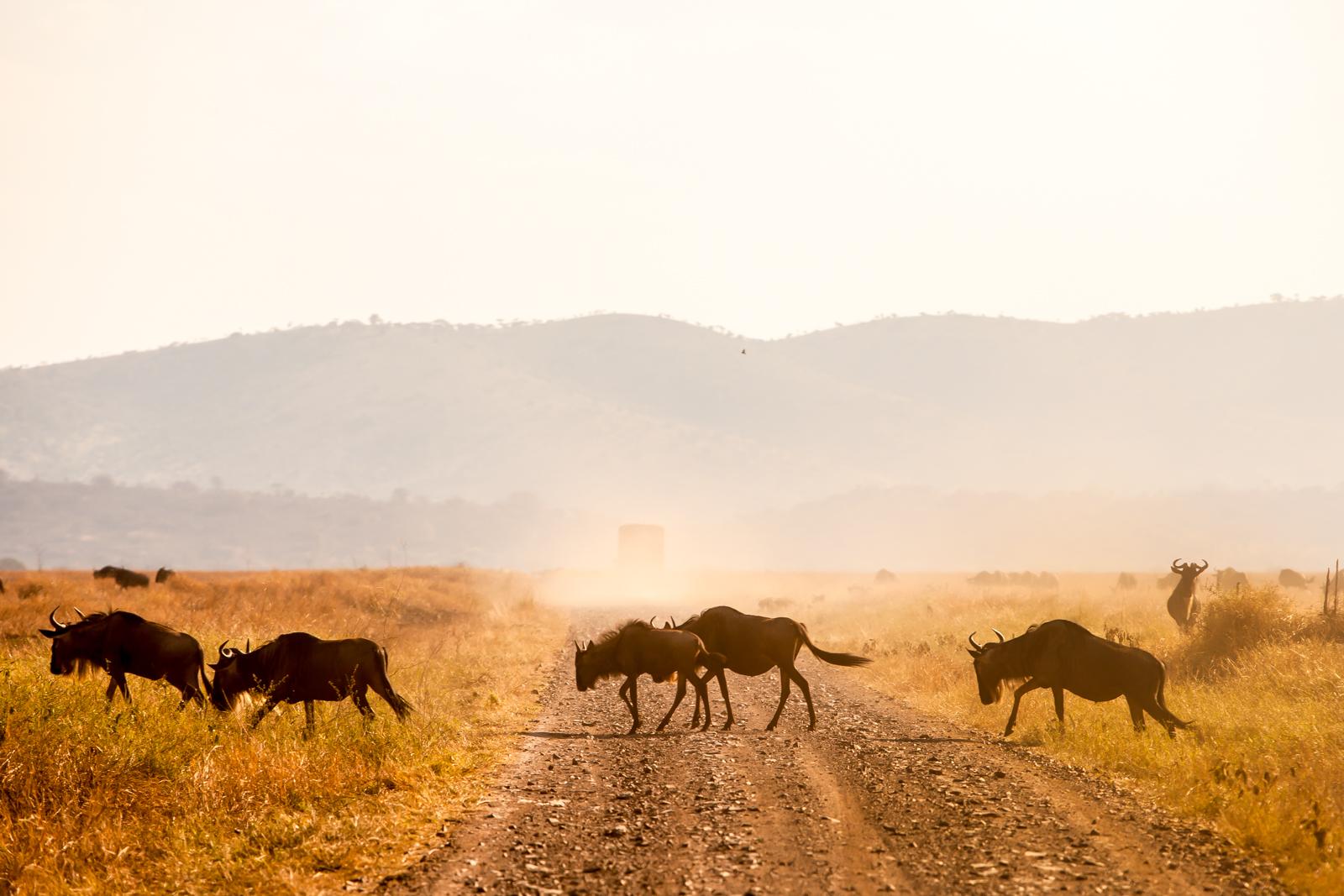 Migration Wildebeest Safari - Kenya Tanzania Travel Specialists