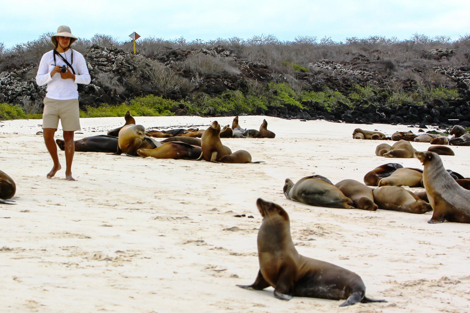 Galapagos Island Seal - Ecuador Travel Specialists