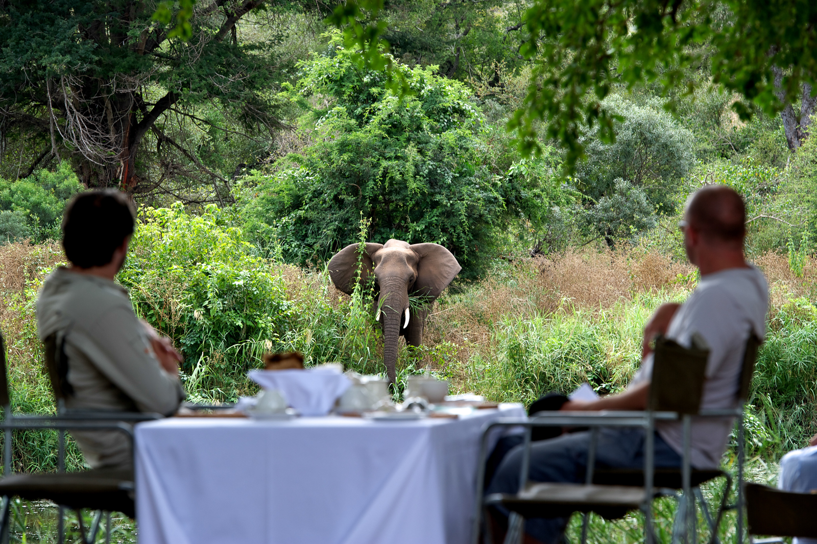 South Africa Safari - African Travel Company
