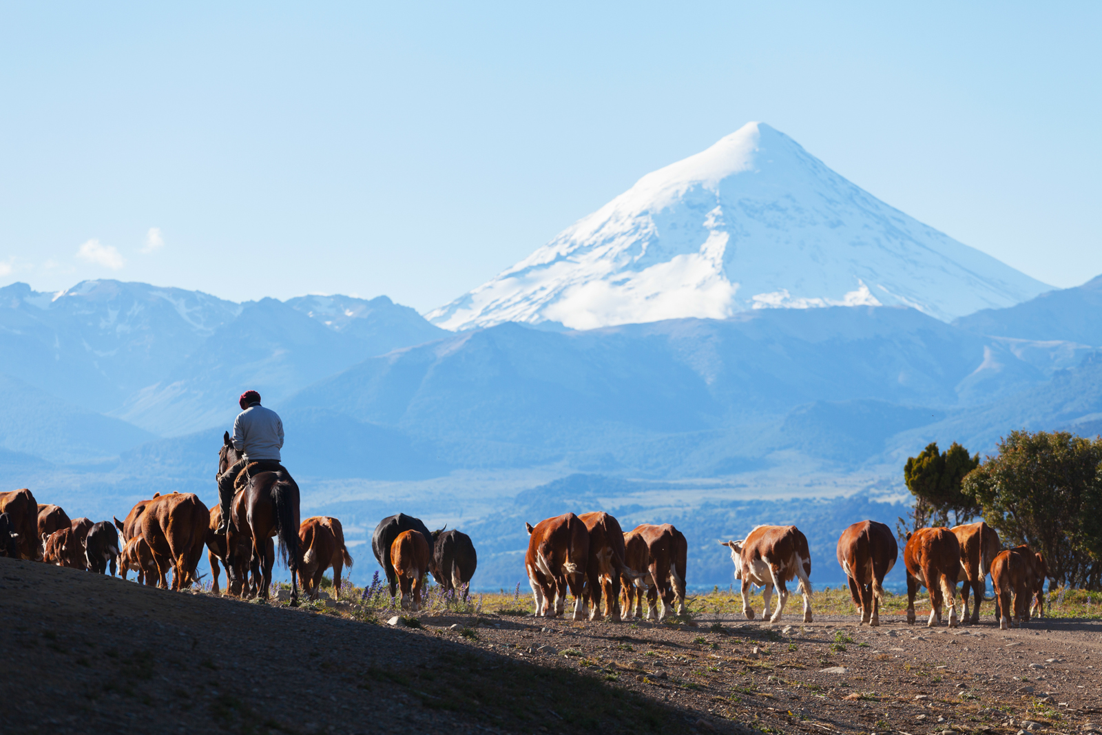 South America Chile - Travel Company
