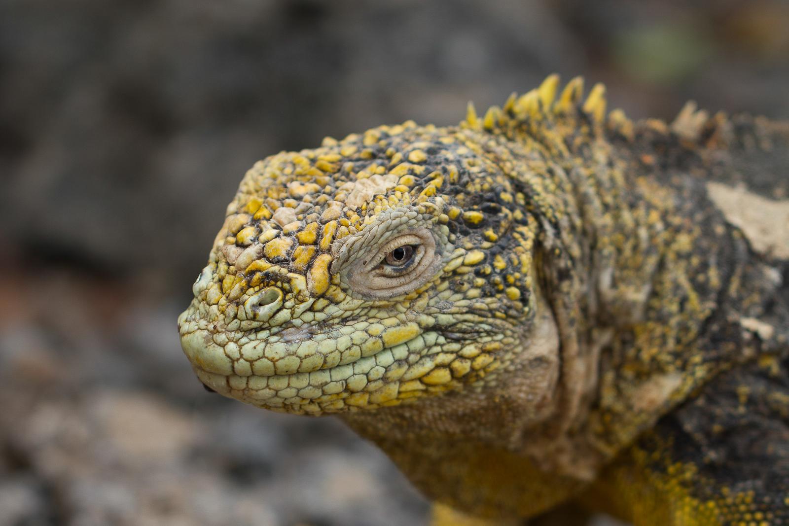 Galapagos Island Cruise - Dragon - Ecuador Travel
