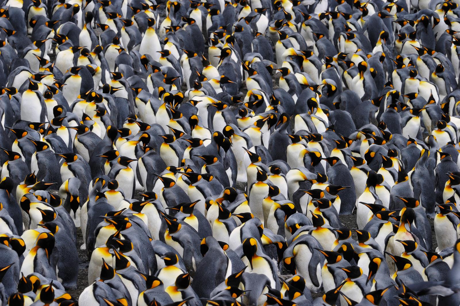 Antartica Cruise Tallis Journeys.jpg