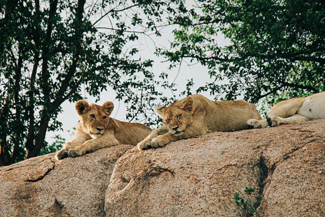 East africa safari tallis journeys 3.jpg