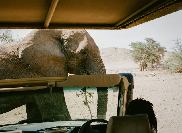 Elephant Safari Namibia - South Africa Specialists