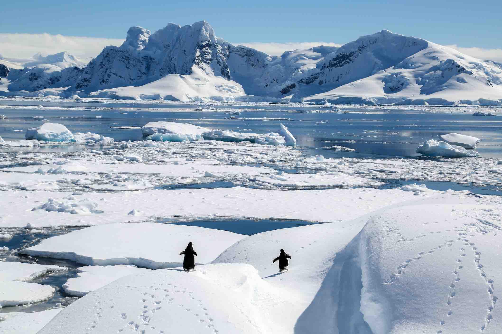 Antarctica Travel Company Luxury .jpg