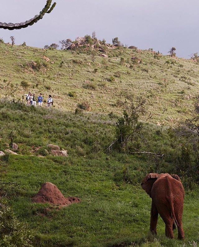 How we like to do safari. #walkingsafari