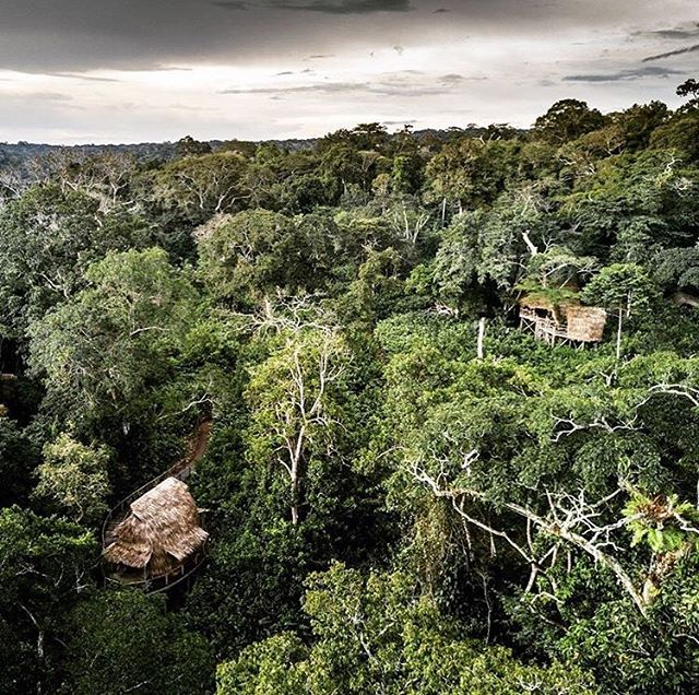 Are you looking for some pretty epic #traveltuesday inspiration? Look no further then Ngaga Camp in the wild Congo Basin. The Camp is situated within the overlapping home ranges of several groups of western lowland gorillas, two of which are habituated.  Ngaga is truly gorilla central. A focal point for world-class research as well as unforgettable primate encounters, Ngaga Camp's unique design evokes the fun and mystery of childhood treehouses. From the six elevated guest rooms, wraparound walkways allow you to peer directly into the forest canopy. Like Lango, the Camp is constructed from natural materials using traditional techniques. 👏🏻🙌🏻