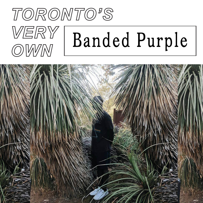 TVO_02_Banded Purple.jpg