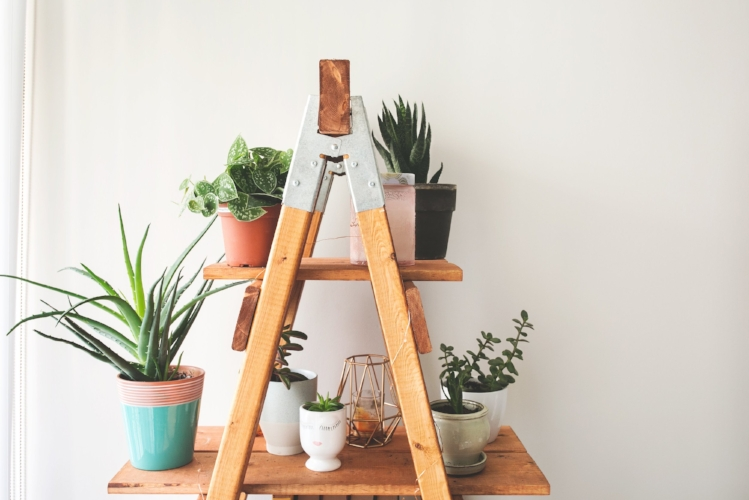 ladder-plant-shelf_4460x4460.jpg