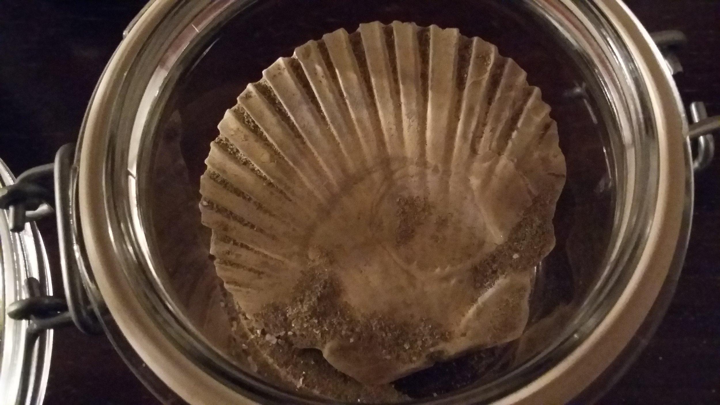 La conchiglia conservata in un vasetto.