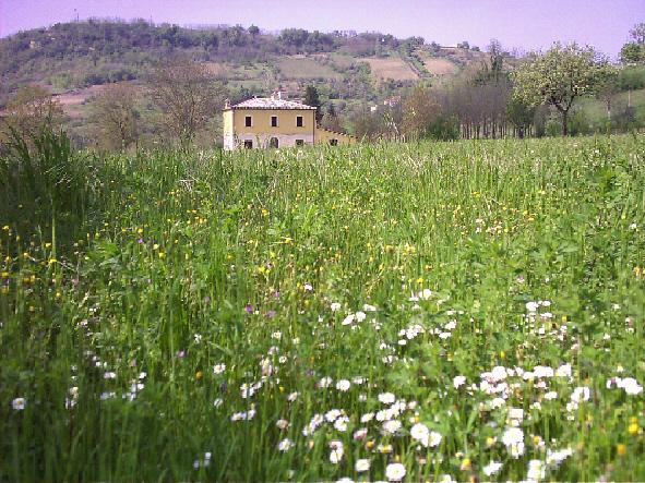 Ph. credits: sito isitutuzionale di San Martino sulla Marrucina