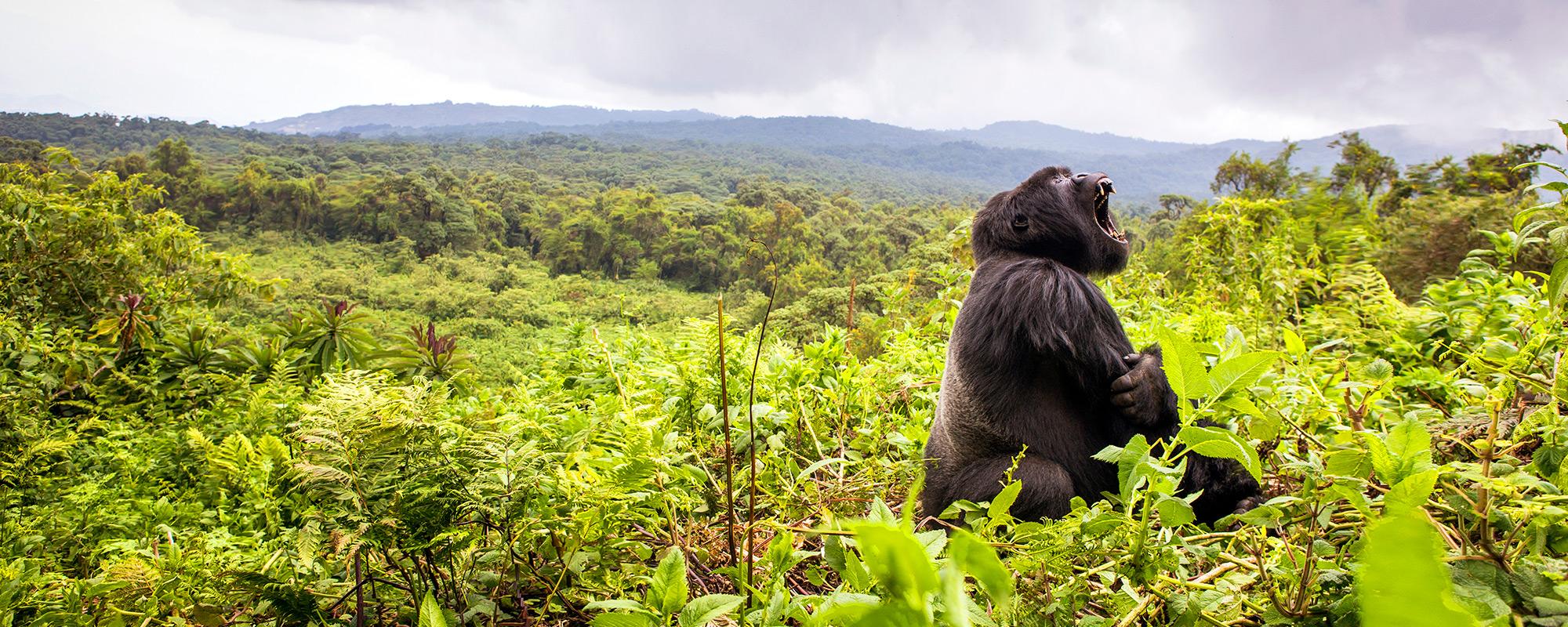 Rwanda_Gorilla_TeaganCunniffe