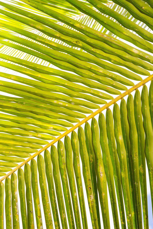 AnseLazio_Seychelles_120.jpg