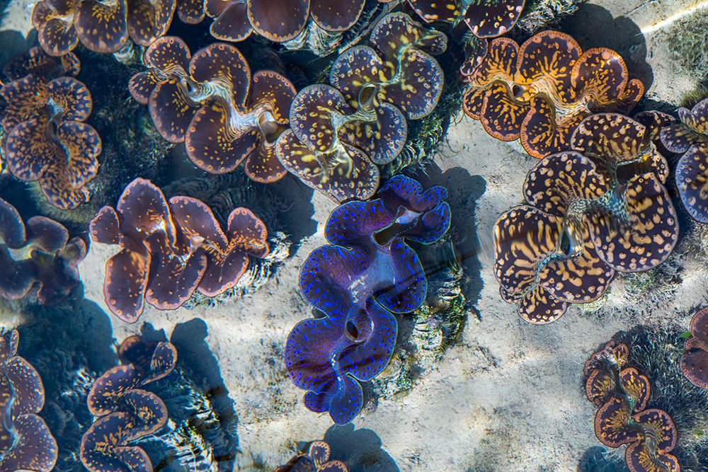 Praslin_Seychelles_166.jpg
