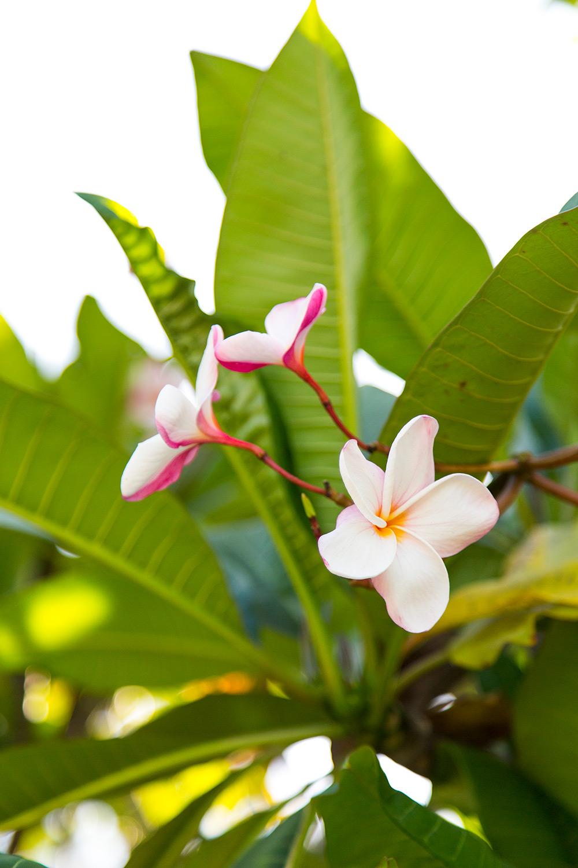 Seychelles_73.jpg