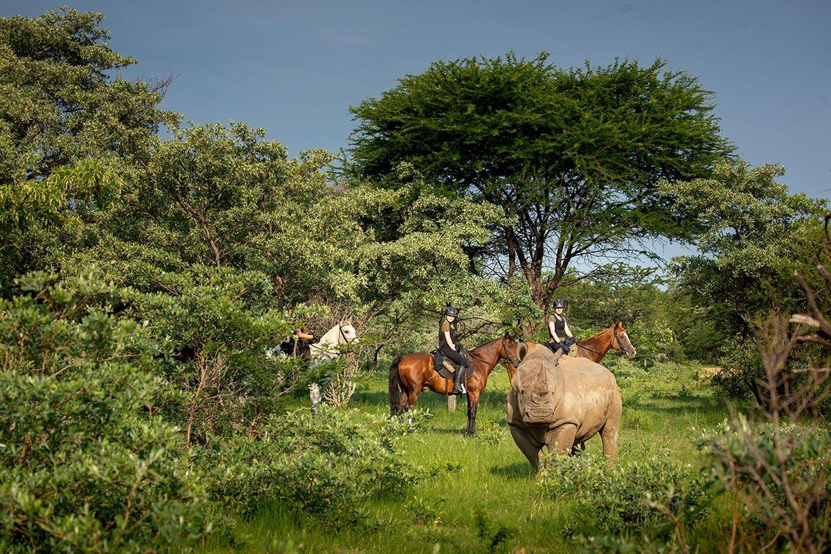 HorseSafari_007.jpg