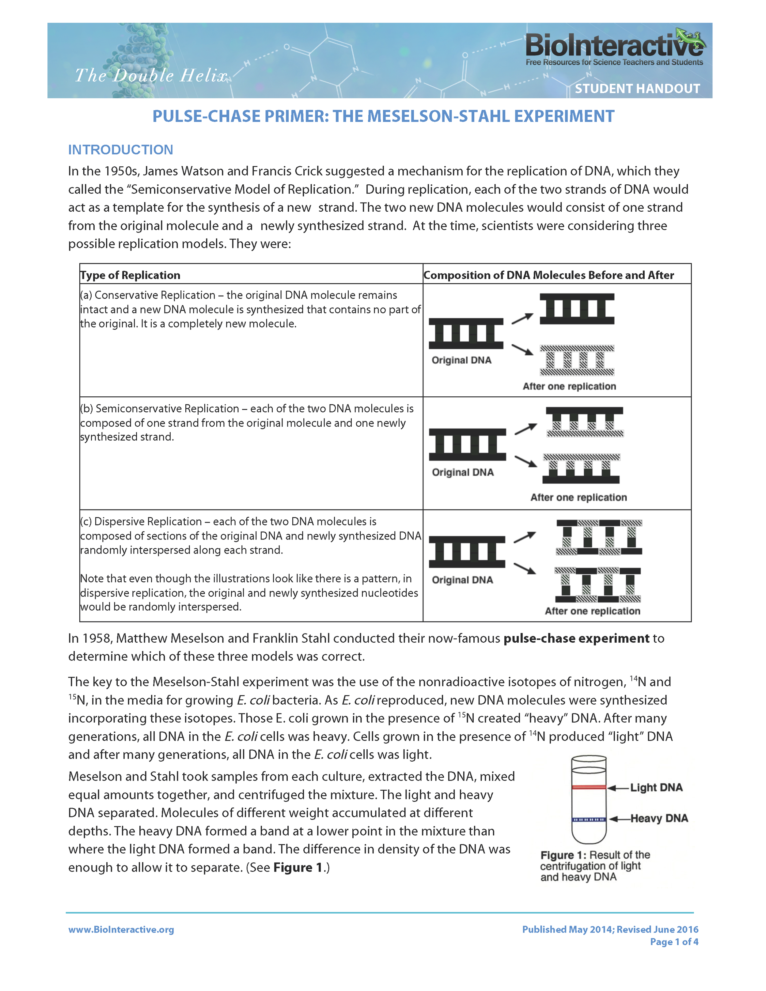 DoubleHelix-Pulse-Chase-Primer-Student (2) (1)_Page_1.png